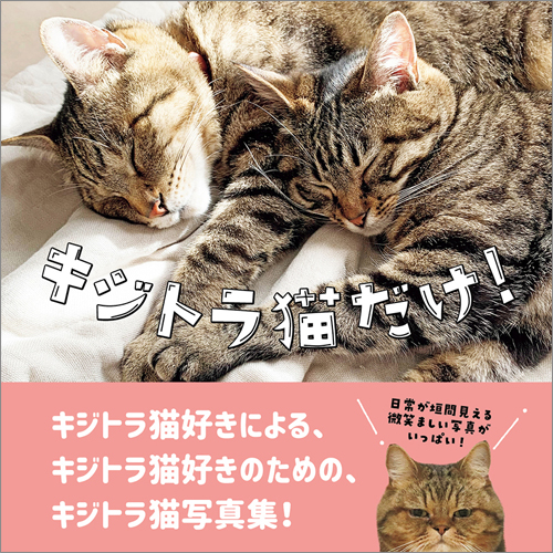 『キジトラ猫だけ!』
